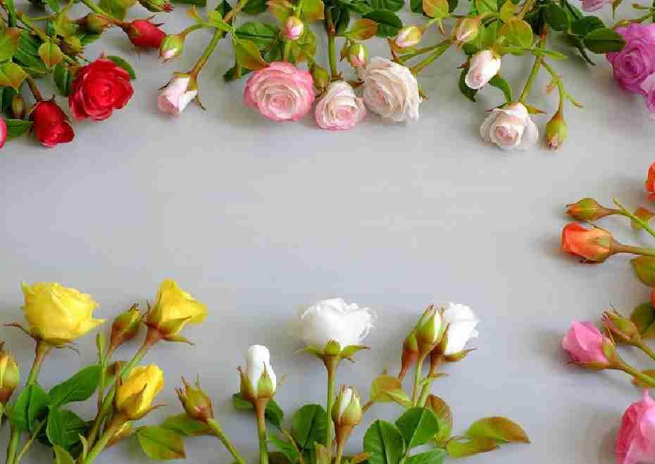 ดอกไม้สีชมพู 25 ชนิดและความหมาย